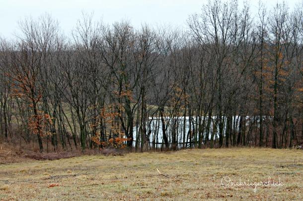 Spring pond {onekriegerchick.com}