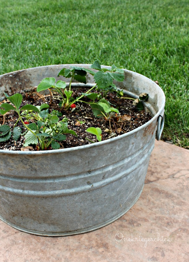 DIY Strawberry planter {Onekriegerchick.com}