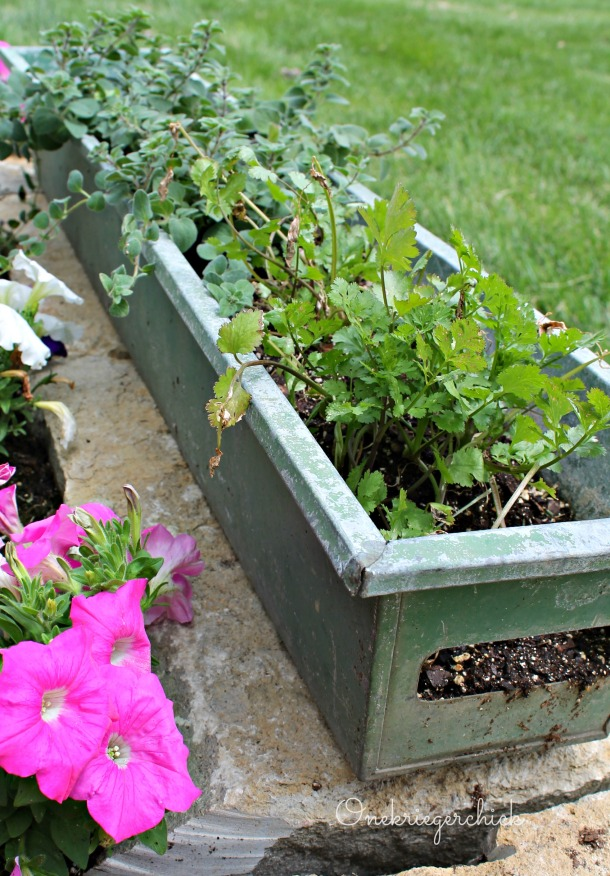 Trough herb garden {Onekriegerchick.com}
